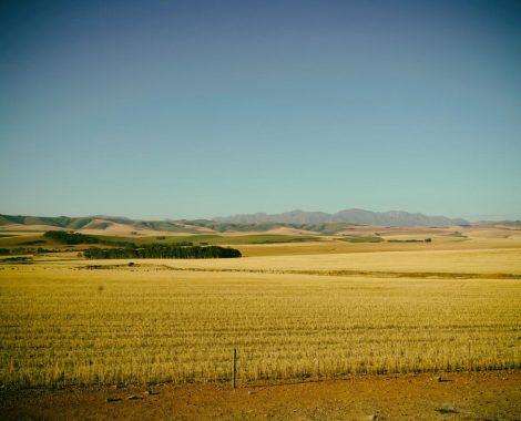 Landscape 1 - 1200 CC2